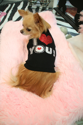 "Nothing says ""Be Mine"" than the I Heart You tee shirt from One Lucky Dog, St. Pete."