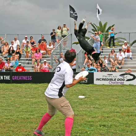 Energy and high-flying athleticism were in full swing during this team's freestyle flying disc performance.  Photograph by Anna Cooke for The New Barker Dog Magazine
