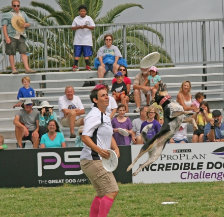 Freestyle Flying Disc Competition during the 2013 Purina Pro Plan Incredible Dog Challenge in St. Petersburg, FL. Photograph by Anna Cooke for The New Barker Dog Magazine.
