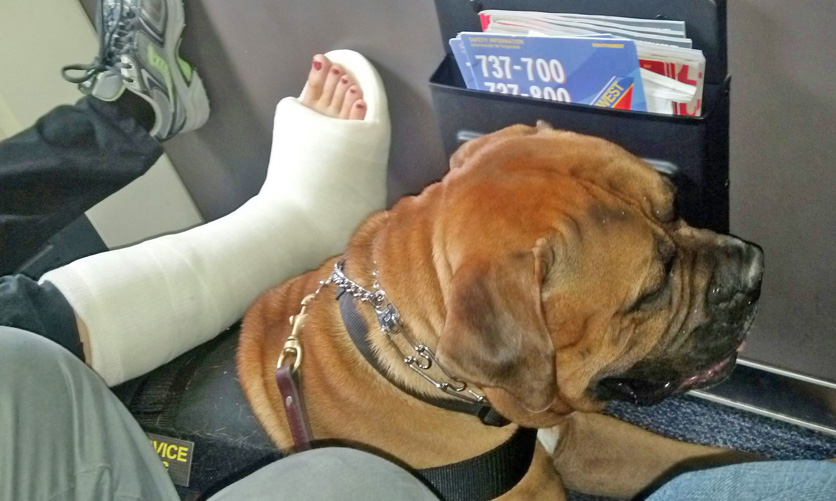 Service Dog In Training And Handler Detained By Southwest Airlines