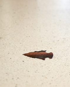 Arrowheads that Richard Gonzmart has been collecting over the years, have been infused into the bar tops.