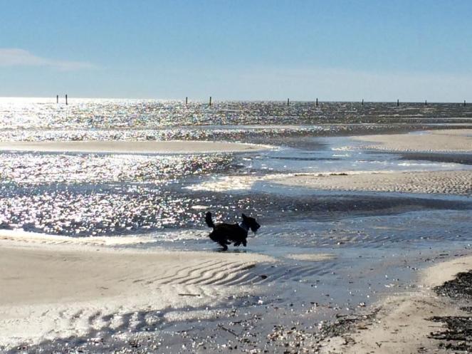 Stella enjoying her beach.