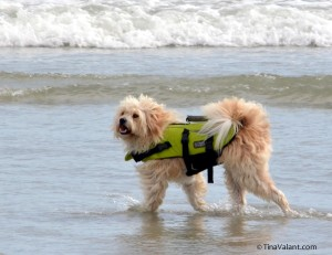 Safety First for our Surf Dog Champs.