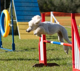 Good Dog Sports-7824