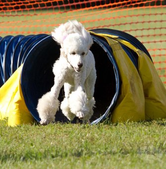 Good Dog Sports-7828