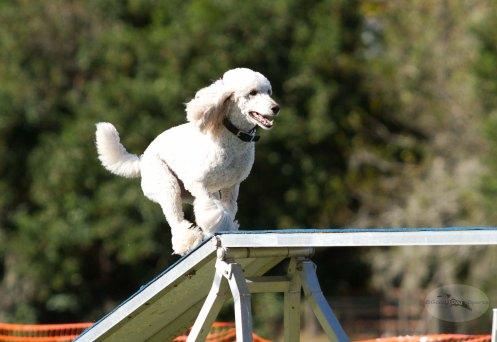 Good Dog Sports-7829