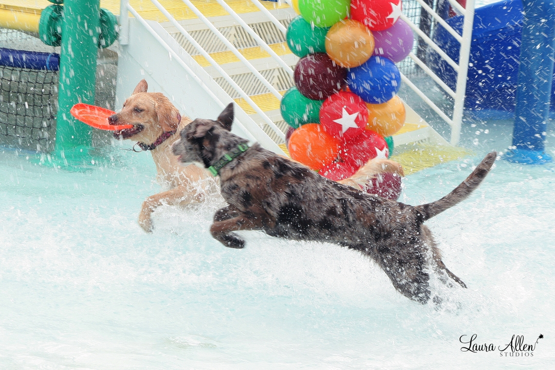 Oliver and his human drive from South Tampa each year to attend Largo's Soggy Doggy Splash Day. Photograph by Laura Allen Studios.