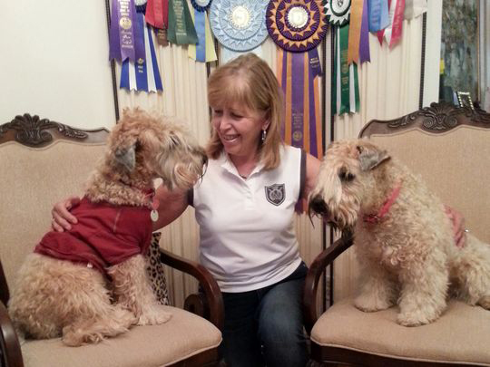 Doric Stancher of New Jersey with Wheaten Terriers Charlie (left) and Krista (right).