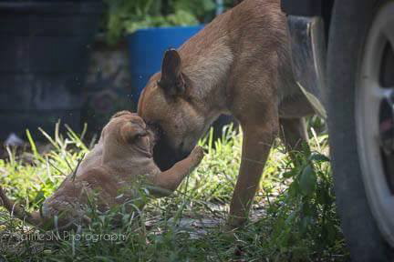 momma_two_pups