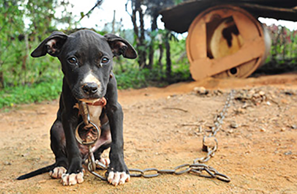 dog_fighting_signs_A