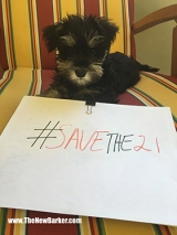 Angel_#SaveThe21