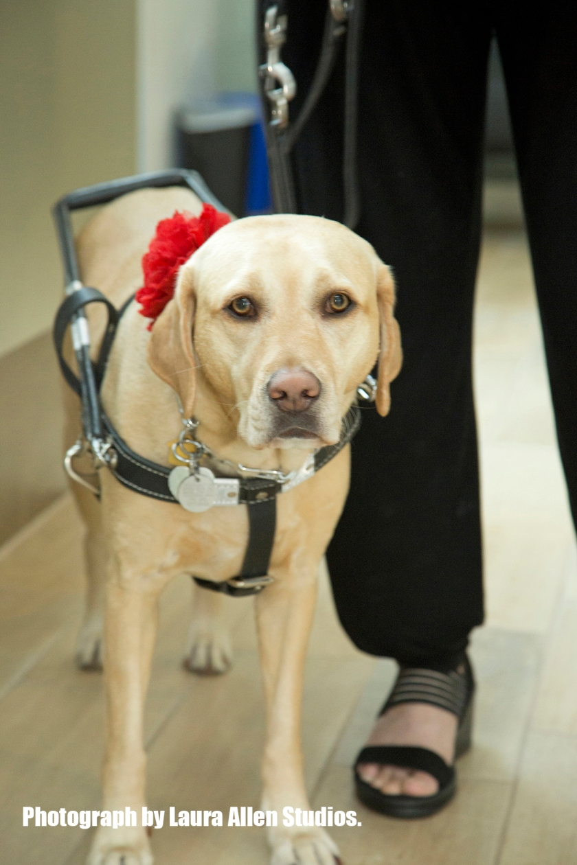 17GuideDog_007 r copy