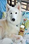 Wolf-Dog_Taj_TinaVaLant