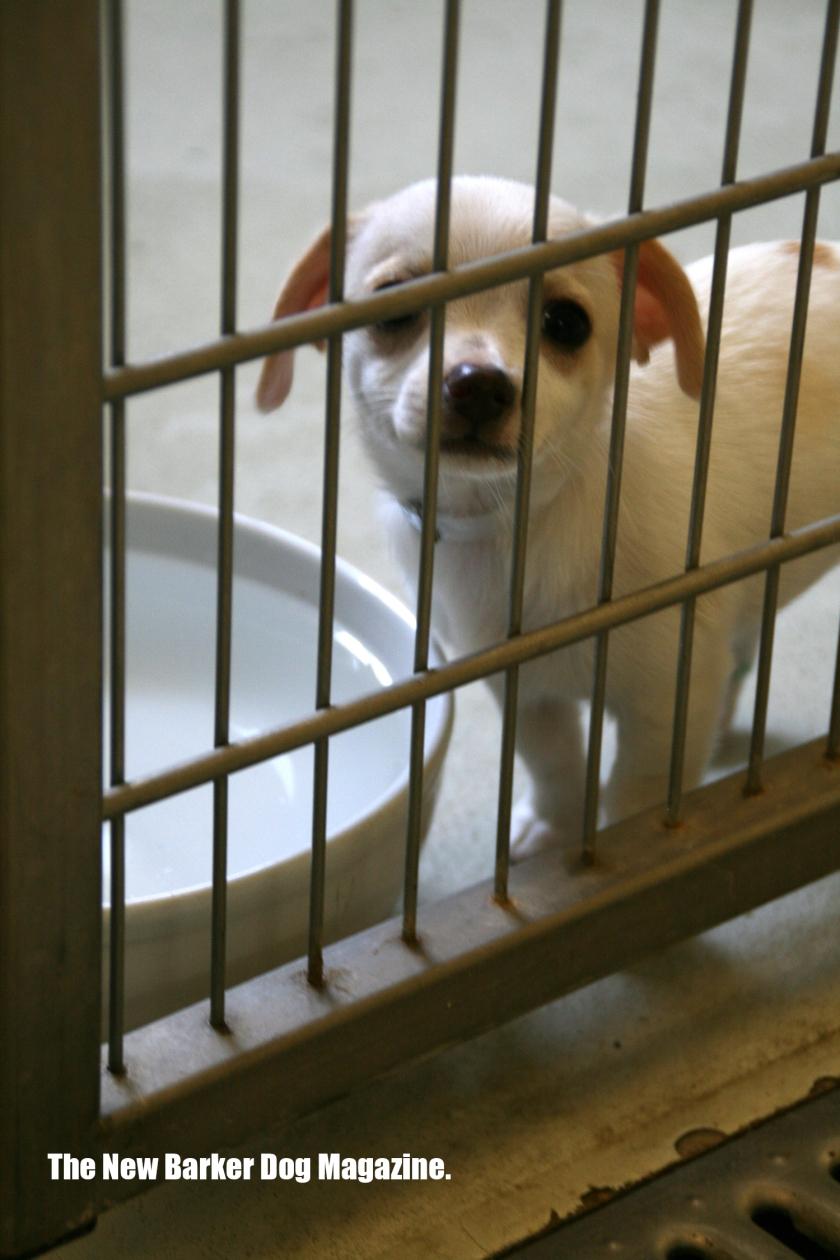 Puppy_SPCA_TB_2013