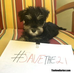 A_Angel_#SaveThe21
