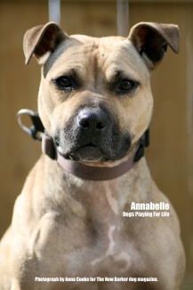 Annabelle_Tag_Two