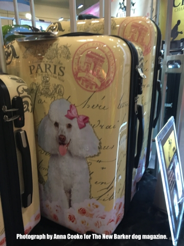 Chariot_Poodle_TheNewBarker