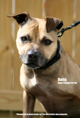 Daisy_Tag_Two
