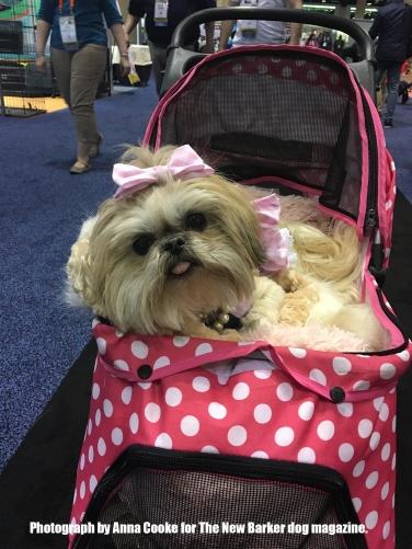 Pink_Polka_Dot_Pup