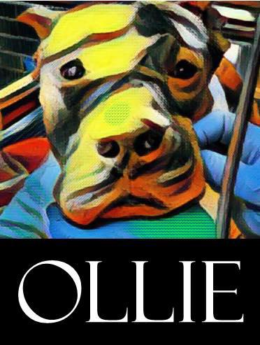 OllieColor