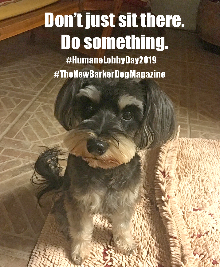 Learn More About Florida's Humane Lobby Day in Tallahassee.