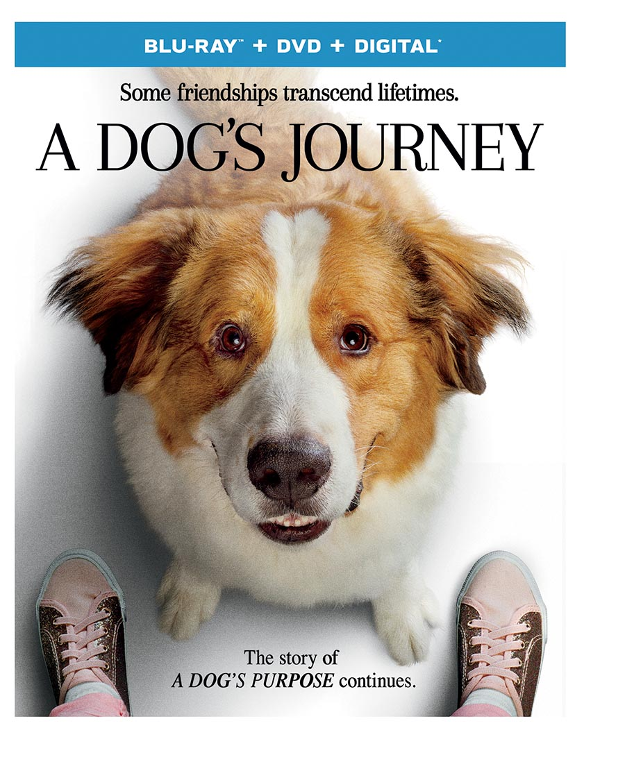 The New Barker Interview with W. Bruce Cameron, Author of A Dog's Journey.